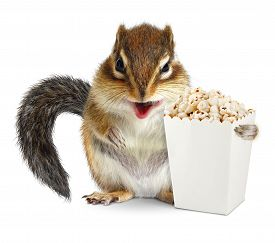 stock photo of laughable  - Funny chipmunk with blank popcorn bucket isolated on white - JPG