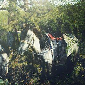 picture of mongolian  - Mongolian Tsataan Horses Tranquil Solitude Nomadic Concept - JPG