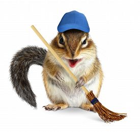 image of chipmunks  - Funny chipmunk with broom cleaning concept on white - JPG