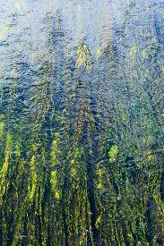 stock photo of algae  - algae in river - JPG