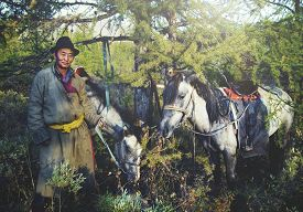 image of mongolian  - Mongolian Tsataan Horses Tranquil Solitude Nomadic Concept - JPG