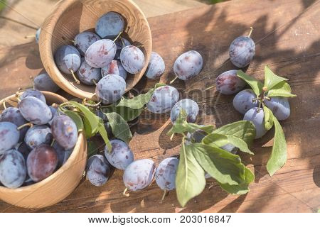 Fresh Plums On Wooden Table In Sunny Day In Garden
