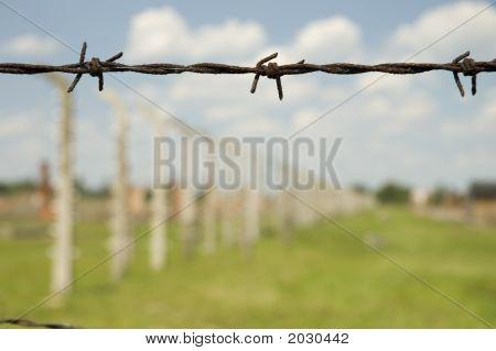 Auschwitz Ii-Birkenau Barbed Wire