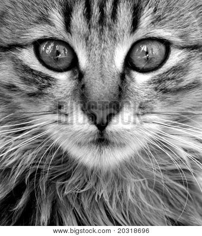 cerca de gato