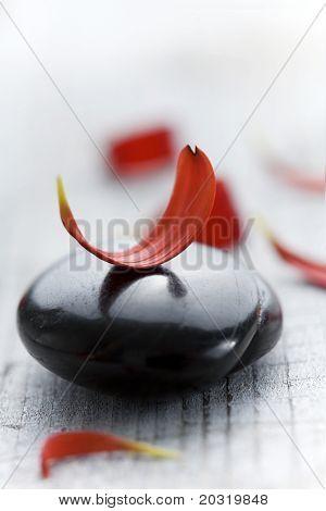 red flower petals on black volcanic rock