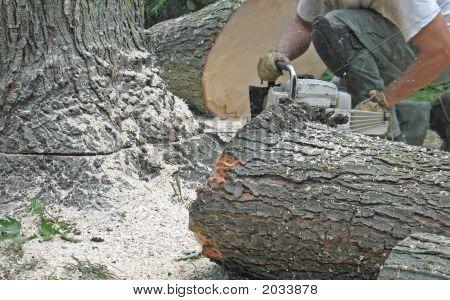 Eliminación de un árbol
