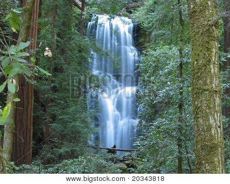 Berry Creek Falls, in Big Bassin park, California