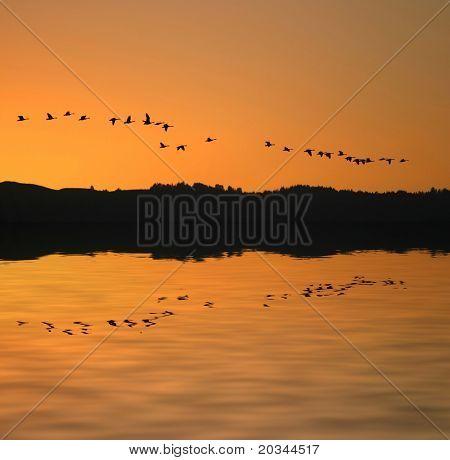 Zugvögel