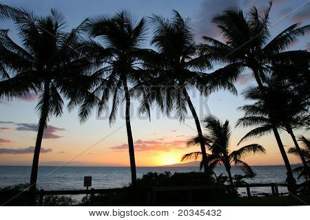 Silhouettes of Palm trees at sunset in Maui