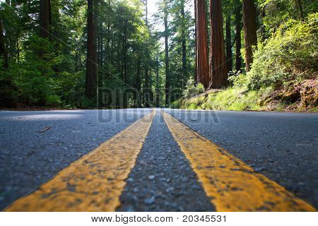 Empty road in giant Redwood Forest