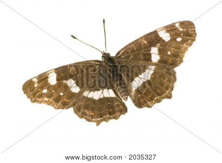 Isolated Summer Map Butterfly