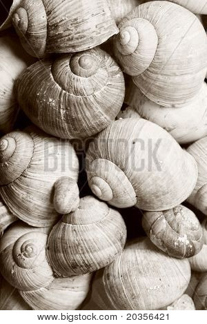 Close up of collection of dirty snail shells, monotone conversion.