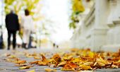 stock photo of bannister  - Autumn in the park - JPG