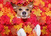 Autmn Fall Leaves Dog poster