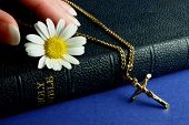 picture of holy-bible  - hand touching bible with gold crucifix and flower - JPG
