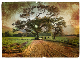 stock photo of lavender field  - Grunge illustration of green lavender fields with an oak tree next to a farm house with a car - JPG