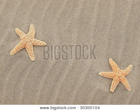 Two Starfish On The Beach With Windswept Sand Ripples