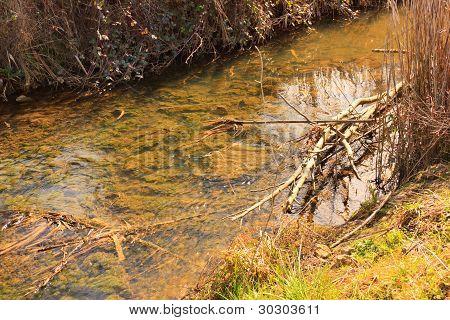Detail Of An Polutted River Under Sunlight
