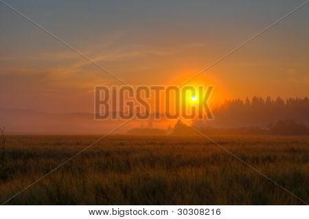 Red Sundown Over Wheat Field