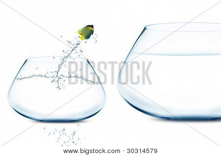 Anglefish Jumping Into Bigger Fishbowl
