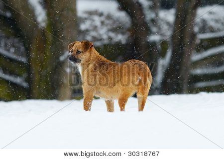 Stray dog in the falling snow