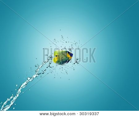 Angelfish Jumping Out Of Water