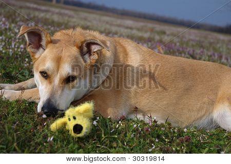Perro de Carolina en el Prado