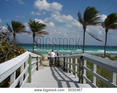 1floridian beach dock and palms in windy