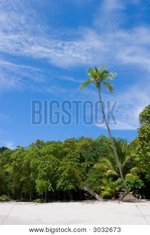 Palm Tree At The Beach