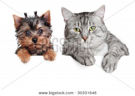 Cat And Dog, Isolated On White Background