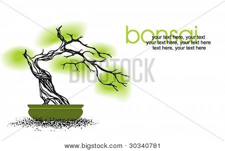 vector card with stylized bonsai tree