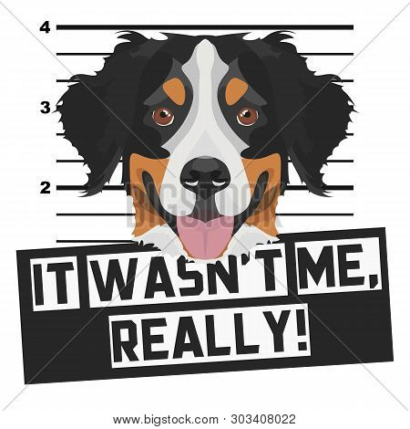 poster of Illustration Mugshot Bernese Mountain Dog - The Guilty Dog ​​gets A Police Photo. Dog Lovers And Dog