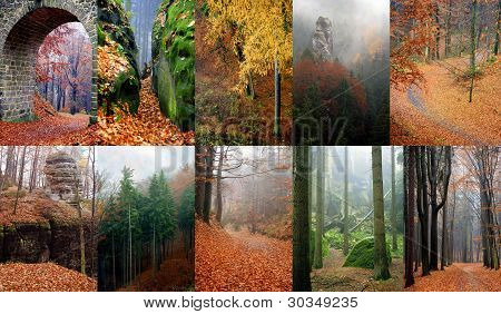 Autumn In Forest Czech Paradise