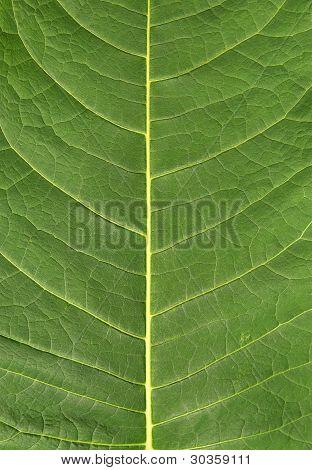 Leaf Natural Background