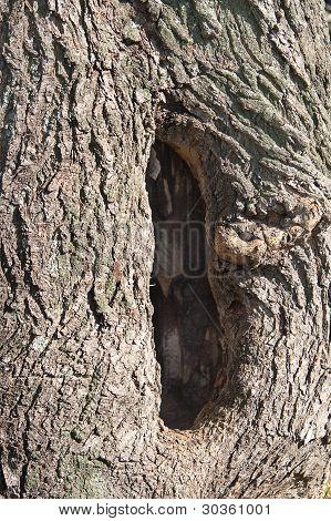 Tree Trunk Hole