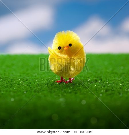 happy easter chick on the grass