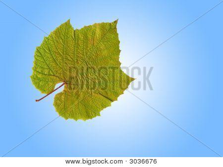 Grape Leaf Beauty