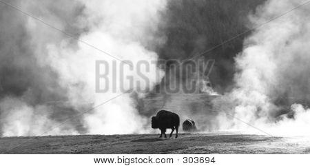 Buffalo Sauna