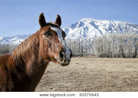 Horse and a Snow Mountain