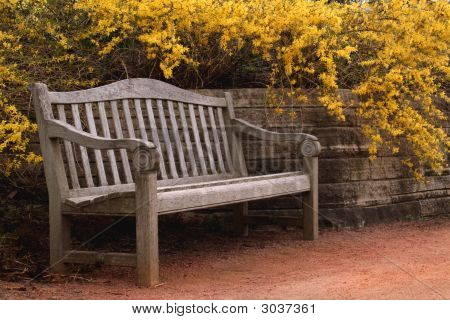 Bench By Forsythia