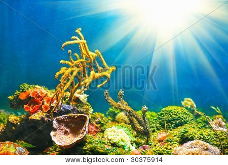 Colorful underwater world with sun