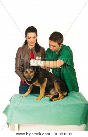 Veterinario a hombre limpieza orejas de perro
