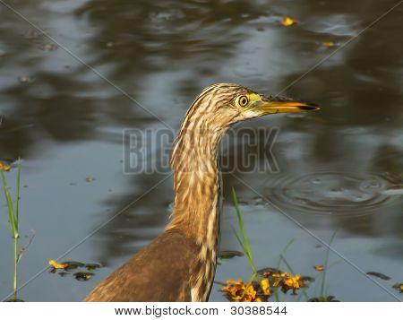 A heron alerting