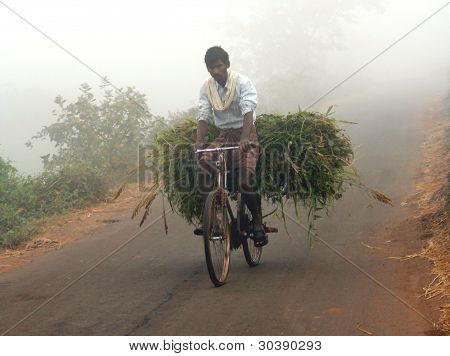 Indian man carrying green grass