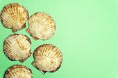 Ocean Shell (seashell) Isolated On Colored Background. Shell Texture, Minimal Concept poster