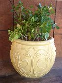 image of pot plant  - potted plants - JPG