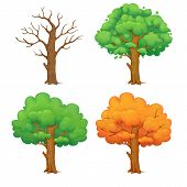 Cartoon Illustration Of A Tree In Different Seasons Isolated On White Background. Leafless Winter Tr poster