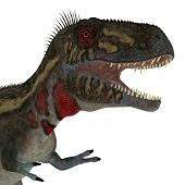 Nanotyrannus Dinosaur Head 3d Illustration - Nanotyrannus Was A Carnivorous Theropod Dinosaur That L poster