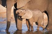 foto of veld  - A herd of African elephants  - JPG