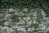 Texture Of A Stone Wall Live Wall Plants Roots Old Castle Stone Live Wall Texture Background - Stone poster